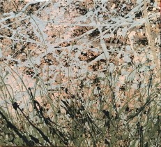 Grasslands, 2016